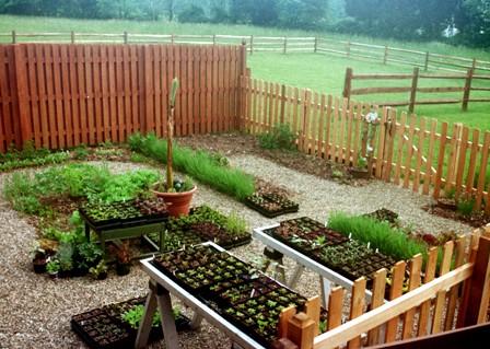 10 วิธีปลูกผักสวนครัวในกระถาง สวนผักน้อยๆ ของคนพื้นที่จำกัด