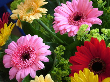 for Bouquet de fleurs gerbera